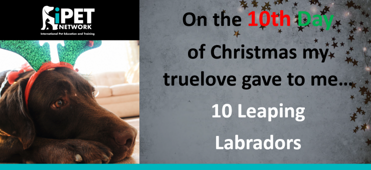 On the 10th day of Christmas my truelove gave to me  -  10 Leaping Labradors