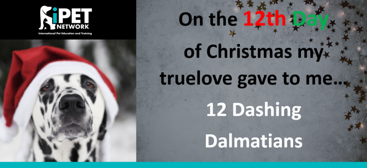 On the 12th day of Christmas my truelove gave me  - 12 Dashing Dalmatians