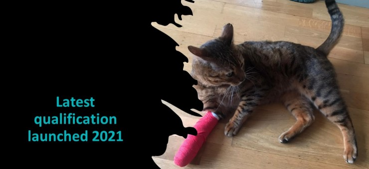 The iPET Network Level 3 Award in Feline Emergency First Aid