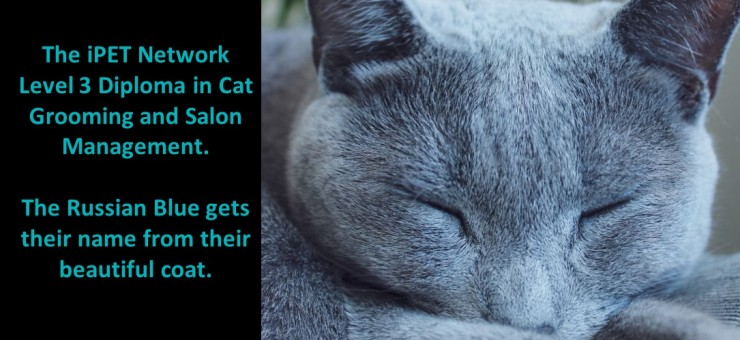 The Russian Blue gets their name from their beautiful coat.