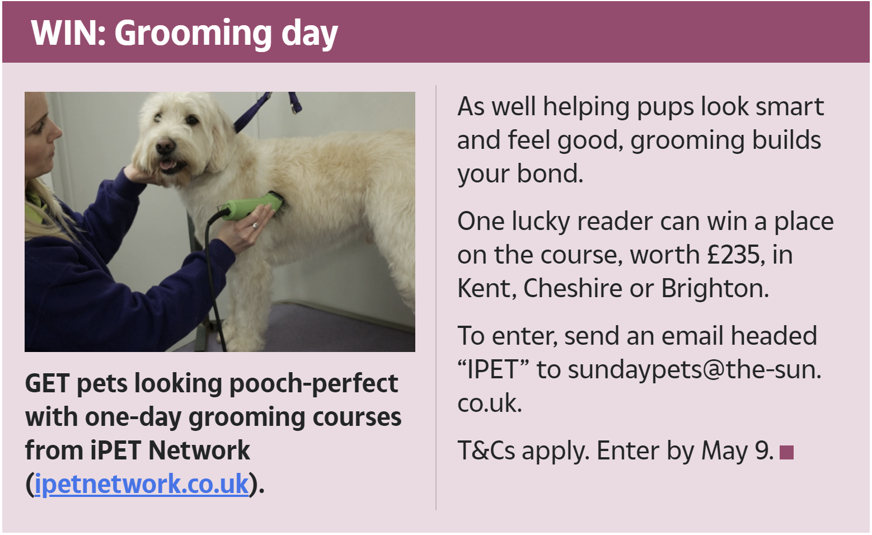 Competition to win a one day grooming course