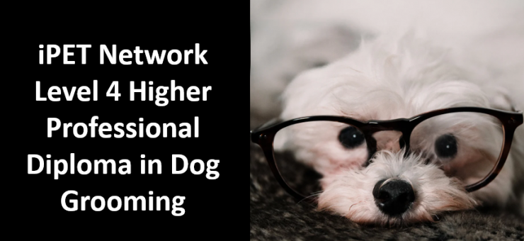 iPET Network Level 4 Higher Professional Diploma in Dog Grooming qualification launch!
