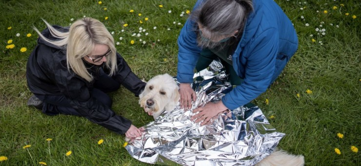 Dog First Aid Video