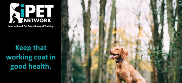 iPET Network: Working Dogs
